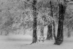 Frozen in time van