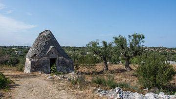 Olijfbomen in Zuid-Italie von Yvonne van der Meij