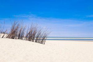 de duinen op het strand van texel