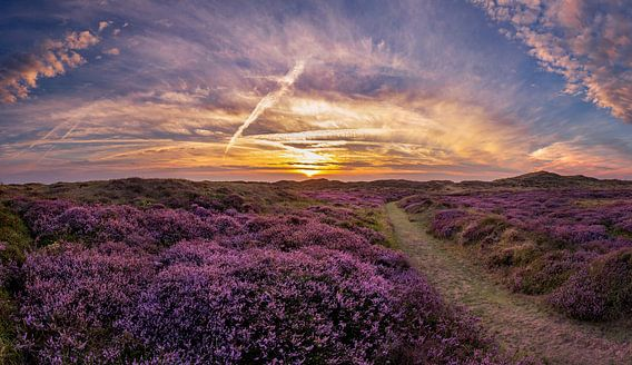 De Bollekamer - Heide - Texel van Texel360Fotografie Richard Heerschap