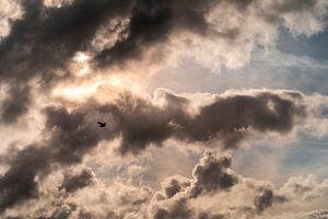 Möwe am Himmel von Stephan Zaun