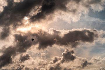 Mouette dans le ciel