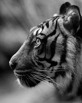 Tigerprofil in schwarz-weiß von Patrick van Bakkum