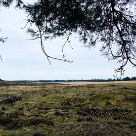 Deelerwoud, Veluwe Gelderland van Jeroen van Esseveldt