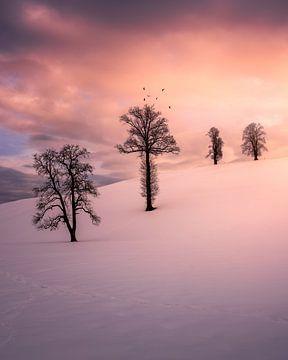 Bomen in de sneeuw van Markus Stauffer
