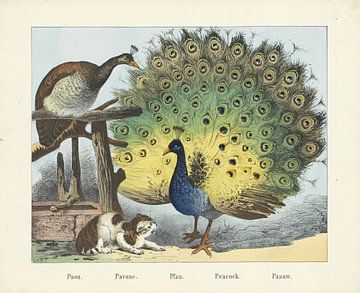 Pauw, firma Joseph Scholz, 1829 - 1880