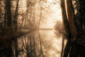 Het Donckse Bos van