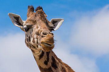 Giraffe van Jasja de Grave
