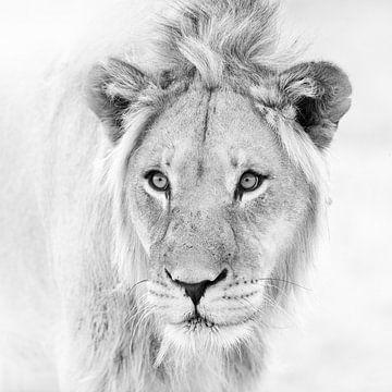 Löwenporträt in Schwarzweiß von Jos van Bommel