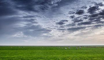 Landschaft mit Schafen von Bert Bouwmeester