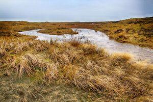 De Hors Texel van