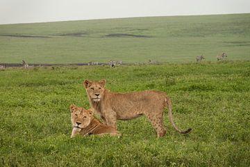 Moeder en Zoon von Stephan Spelde