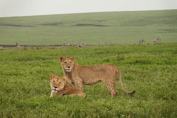 Moeder en Zoon van Stephan Spelde