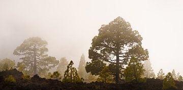 Nebelwald III von Steven Driesen