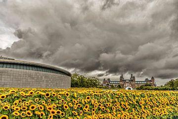 Zonnebloemen en het Rijksmuseum in Amsterdam