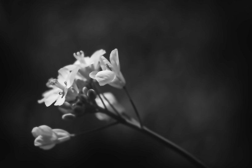 Butterblume von Arjen Roos