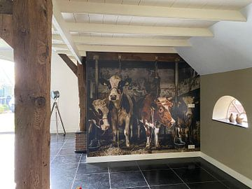 Klantfoto: Koeien in oude koeienstal
