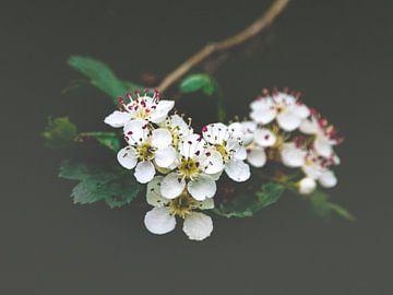 Bloemenmagie van Mike Friedrichs