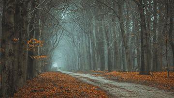 Regale Gambeson Landschaft von AciPhotography
