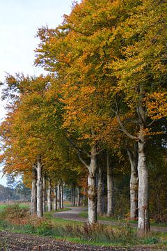 Bomenrij Drenthe in herfst van My Footprints