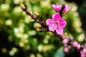 Purple Flower van Geert Huberts