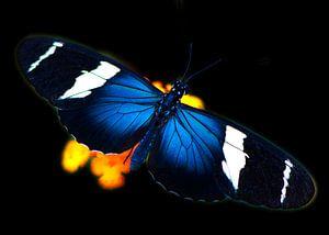 Vlinder in tropische tuin