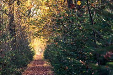 Herbstwandern von Ronenvief