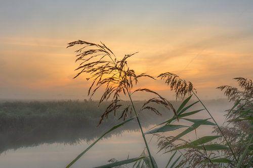 Zonsopkomst mistige ochtend