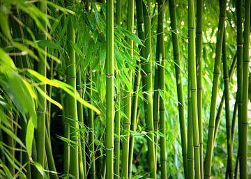 Bamboo van Gabi Siebenhühner