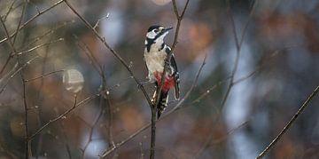 Woodpecker bird van
