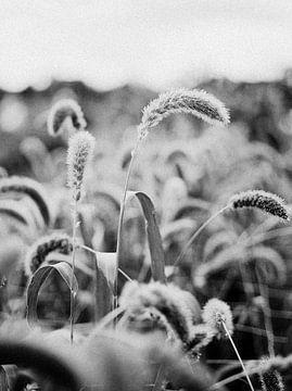Bild eines Halms in einem Feld von Hanke Arkenbout