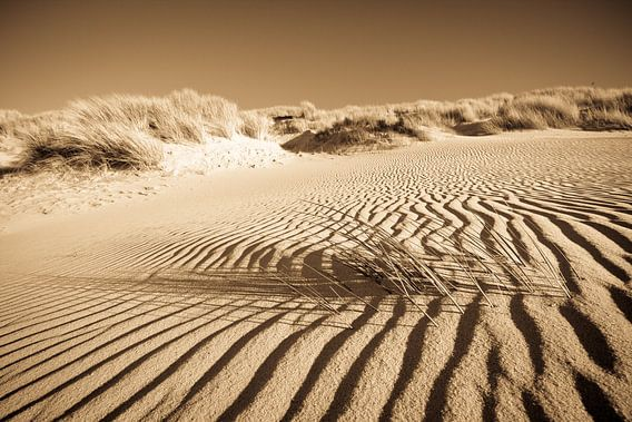 Das Strandhafer und der Sand