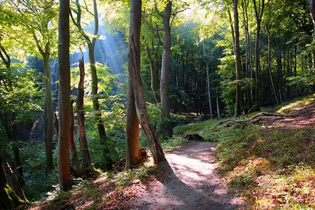 Herbstwald im Nationalpark Jasmund von Ostsee Bilder