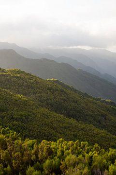 Bäume auf Bergen. Sonnenstrahlen im Vordergrund. von Robin van Maanen