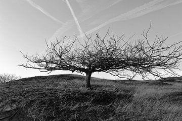 Baum mit Geschichte von Rob Donders Beeldende kunst