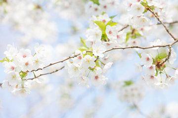 Blüte von Elles Rijsdijk