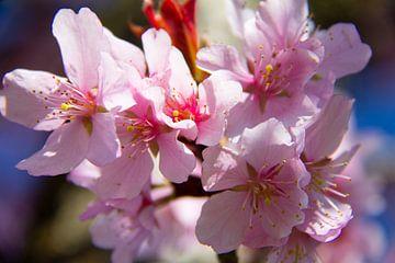 Nahaufnahme einer schönen rosa Blume von Marco Leeggangers