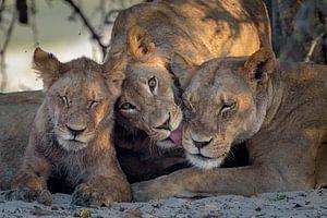 Leeuwen family