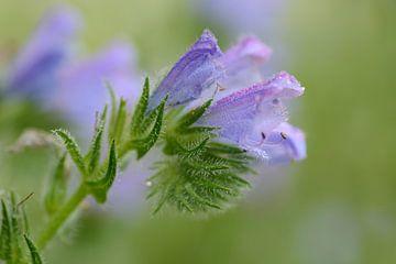 Last flowers.  sur Margo Biewinga