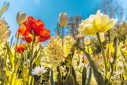 Een bos fleurige bloemen