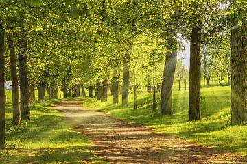 Avenue of trees van Gunter Kirsch