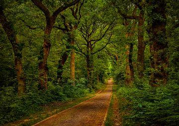 Laan door het bos in Doorwerth van Tim Abeln