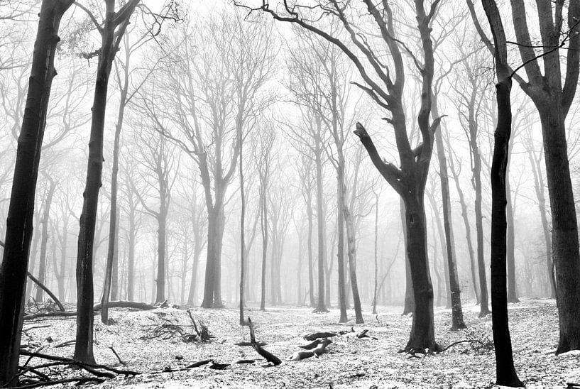 Misty morning van Sven Zoeteman