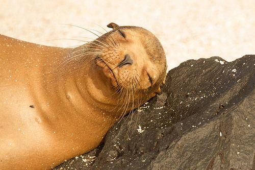 Schattige Zeeleeuw geniet van het zonnetje! van