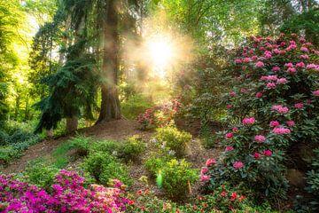 Kleurrijke foto van bos en rododendrons waarbij het licht je kamer binnen schijnt! van gooifotograaf