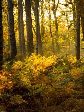 Het bos van Natasja Martijn