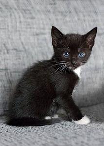 Klein zwartwit kitten op grijze bank van