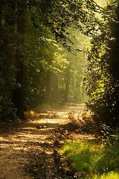 bospad van Nienke Stegeman