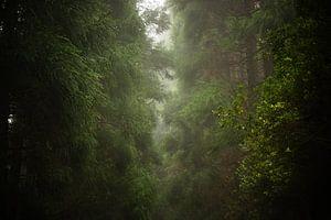 Mistig bos  van