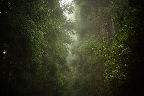 Mistig bos  van Pieter  Debie